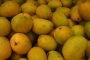 Mangoes ready to hit market