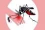 Dengue claims two more lives in Khulna, Faridpur