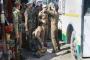 7 injured, 3 critical in grenade attack in Kashmir