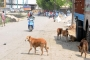 Baby mauled to death by dogs in India