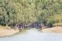 Sundarbans once again stand against cyclone as saviour