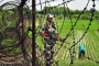 Bangladeshi killed by Indians along Sylhet border