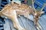 7 deer poachers held in Sundarbans