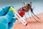 9 new dengue cases reported in 24 hours