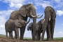 Elephants counted from space for conservation
