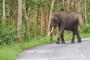 Wild elephants kill 2 teenagers in Bandarban