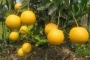 Boosting non-conventional fruit, medicinal crops production stressed